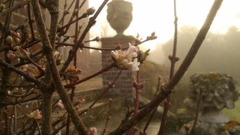 misty-viburnum